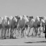 #الحسي ـ من هجر قبيلة #زعب ( تقرير )